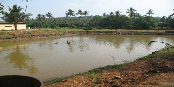 indian-fish-farming-pics